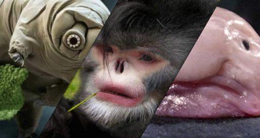 devirales.cl_top-de-los-20-animales-mas-raros-que-hay-en-el-mundo